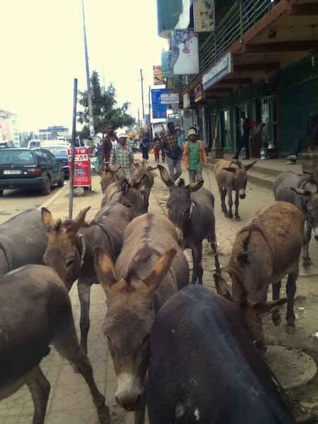 Surrounded by donkeys on my walk home from the NURU office in Addis.